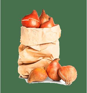 Луковицы и семена